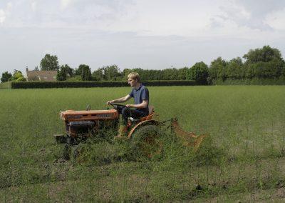 asperge aanplant frezen