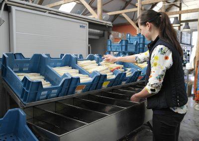 witte asperges sorteren